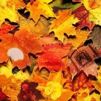 Мoments Оf Autumn