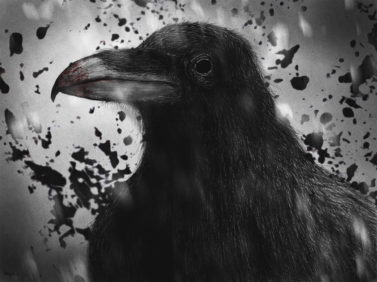Вороны рисунок