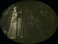 Charles Corbet, Filtered light through trees    c. 1910, autochrome 9 x 12