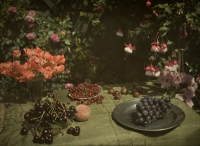 Ernest van Zuylen, Still life with grapes and cherries – c.1917, autochrome 9 x 12