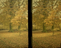 Paul Sano, Leaves of autumn    c. 1912, stereo autochrome 9 x 12