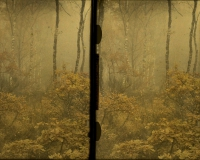 Paul Sano, Early morning in the forrest    c. 1912, stereo autochrome 9 x 12