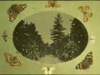 Paul Sano, Scene of snow landscape and butterflies    c. 1910, autochrome 9 x 12