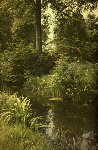 Alfonse Van Besten, Yellow flags near brook    c. 1910, autochrome 12 x 9