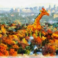 """""""Urban Giraffe"""""""